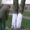 Пролетно почистване 10
